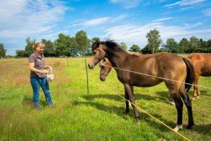 Pferde hinter einem Weidezaun