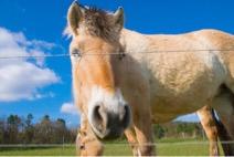 Wieviel Joule braucht dein Weidezaungerät um Pferde zu halten?