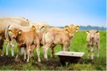 Wieviel Joule braucht dein Weidezaungerät um Rinder zu halten?